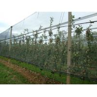 Wholesale Dark Green HDPE Anti Hail Nets with UV For Agriculture , 30gsm - 50gsm from china suppliers