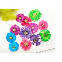 Wholesale Small Daisy Natural Real Pressed Flowers True Plants Specimens For DIY Photo Frame from china suppliers