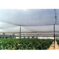 Wholesale High Strength Anti Hail Agriculture Net , Hdpe Raschel Knitted Netting from china suppliers