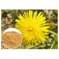 Dandelion Root Plant Extract Powder Flavones Improving Immunity For Dietary Supplememnt