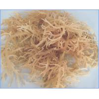 Good quality and fast supply ability refined Kappa carrageenan with particle size 200 mesh for E standard China