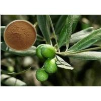 Wholesale CAS 32619-42-4 Cosmetic Raw Materials Olive Leaf Extract Powder For Digestive System from china suppliers