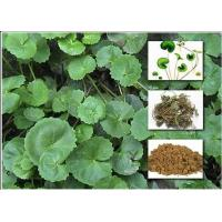 Wholesale Gotu Kola Extract Powder Cosmetic Raw Materials Asiaticoside For Enhancing Immunity from china suppliers