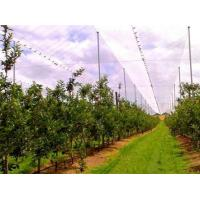 Wholesale Hdpe Raschel Knitted Anti Hail Nets / Hail Protection Net For Fruit Tree from china suppliers