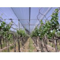 Wholesale High Strength Plastic Anti Hail Netting For Vineyard / Grape , Custom from china suppliers