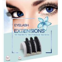 Wholesale Top quality premade fanned 3D Eyelash Extensions 0.07 Camellia Lashes from china suppliers