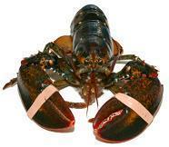 Wholesale Canadian Lobster Crate (Boat Run) from china suppliers
