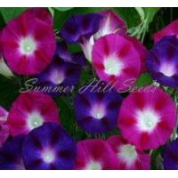 China Bohemian Shades Morning Glory wholesale