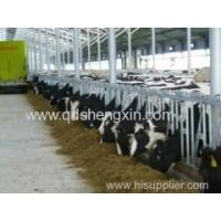 Cattle Headlocks for Cattle Farm