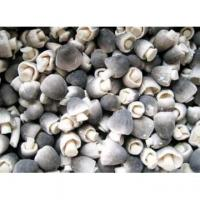 Wholesale Frozen mushrooms Frozen straw mushroom from china suppliers