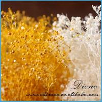 Decorative dry flower for craft