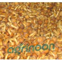 Wholesale Frozen Nameko Mushroom from china suppliers