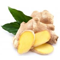 Wholesale Natural Essential Oil 【Product Name】Ginger Essential Oil from china suppliers
