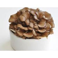 Wholesale Maitake mushroom extract Standardized Extract from china suppliers